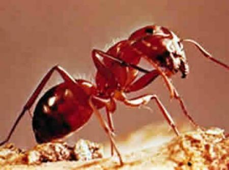 hormigas.jpg