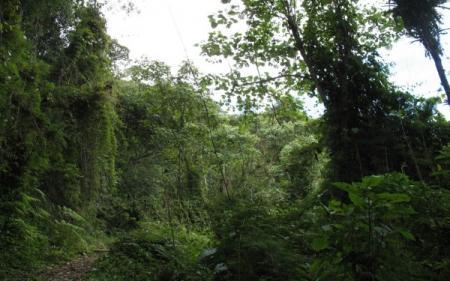 bolivia selvajpg