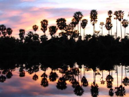 el pantanal.jpg