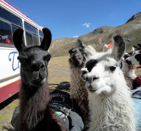 bolivia-animales.jpg
